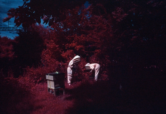 Edward Thompson, Mellarium #1, from The Apiary, 2015