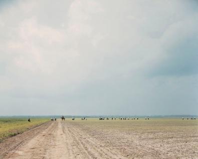 The Farm, Angola State Prison, Louisiana